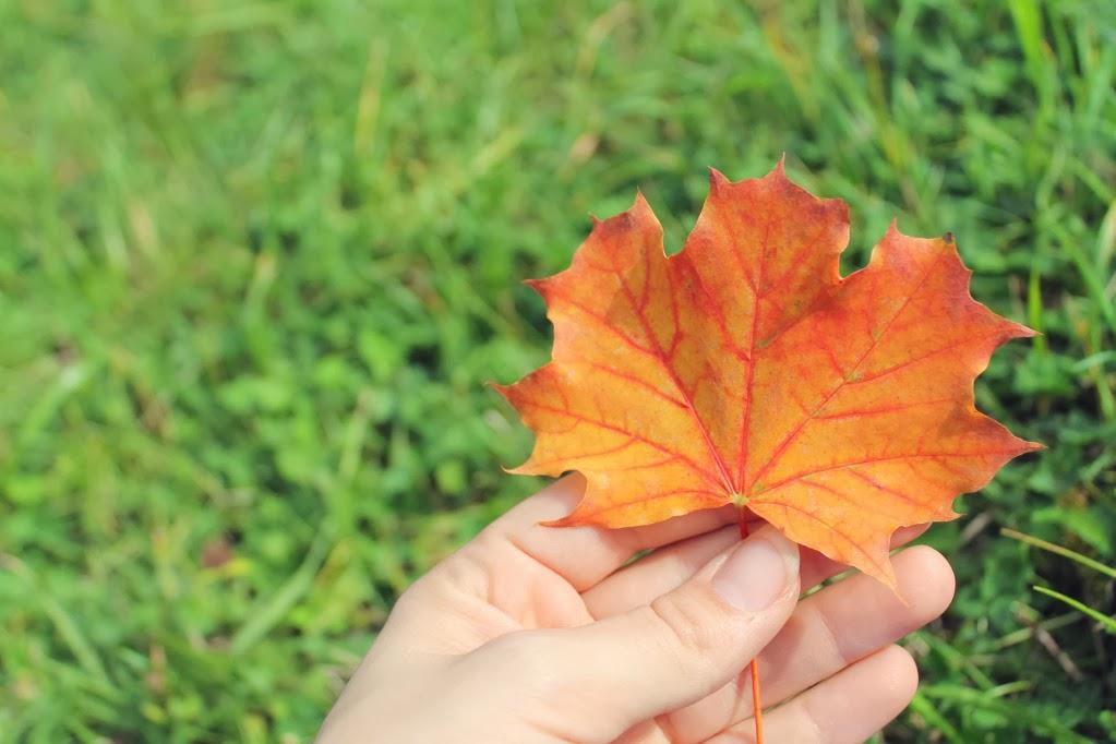 Canon austesten~ Herbsttag im Park