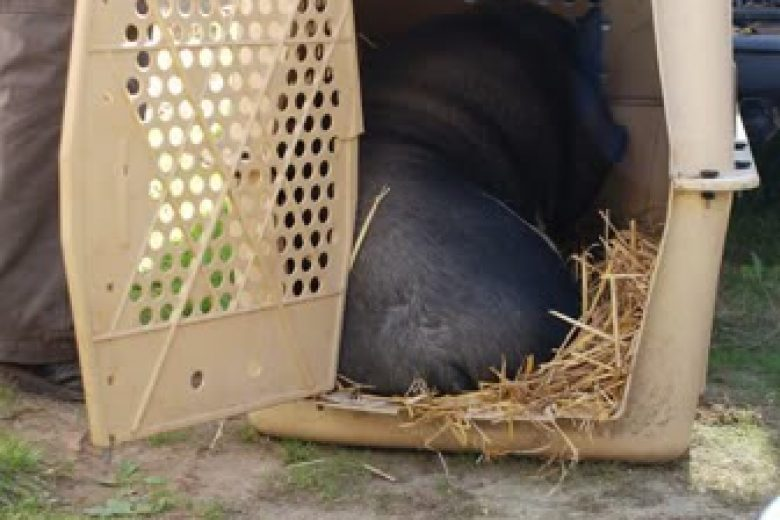 Schweinelovestory: Einzug des Tierheimschweins