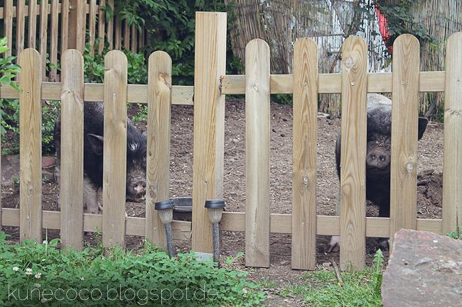 Schweinelovestory # 12 ~ Schweinebesuch
