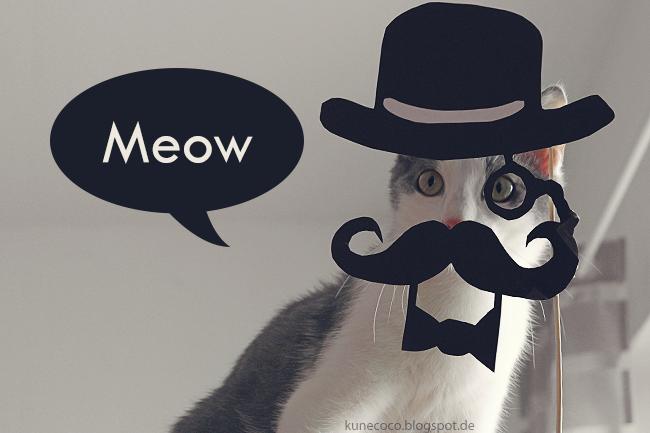 Rawr – Meow – Miezenfotos
