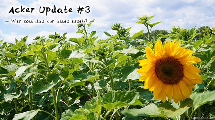 KuneCoco • Acker Update #3