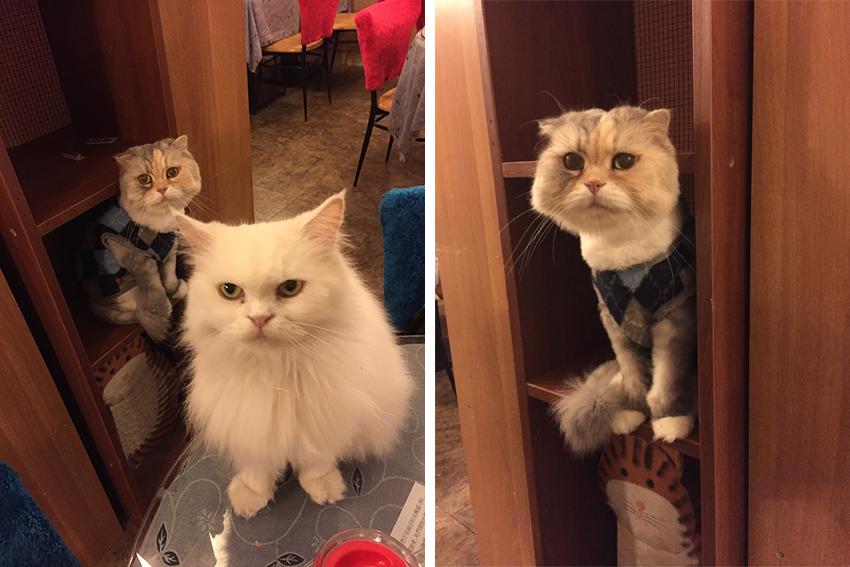 KuneCoco • Cat Café