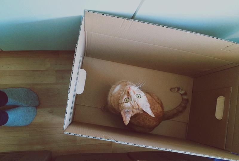 KuneCoco • Schnurrberts Jubiläum • Umzug mit Katze