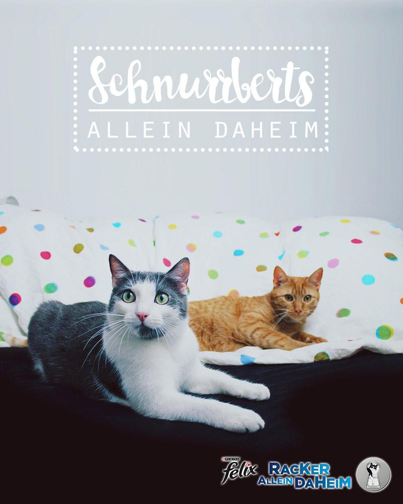 KuneCoco • Schnurrberts • FELIX Racker allein daheim