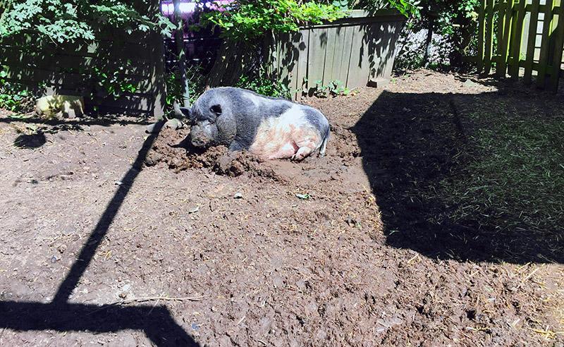 KuneCoco • Schweinelovestory #17 • Bruno