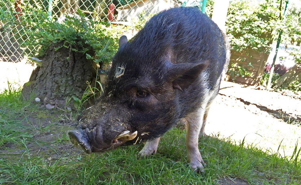 Schweinelovestory #18: Versautes auf Snapchat