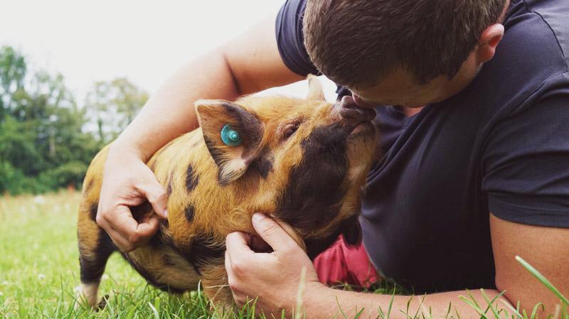 KuneCoco • Lemsdale Kune Kunes • Schweineliebe