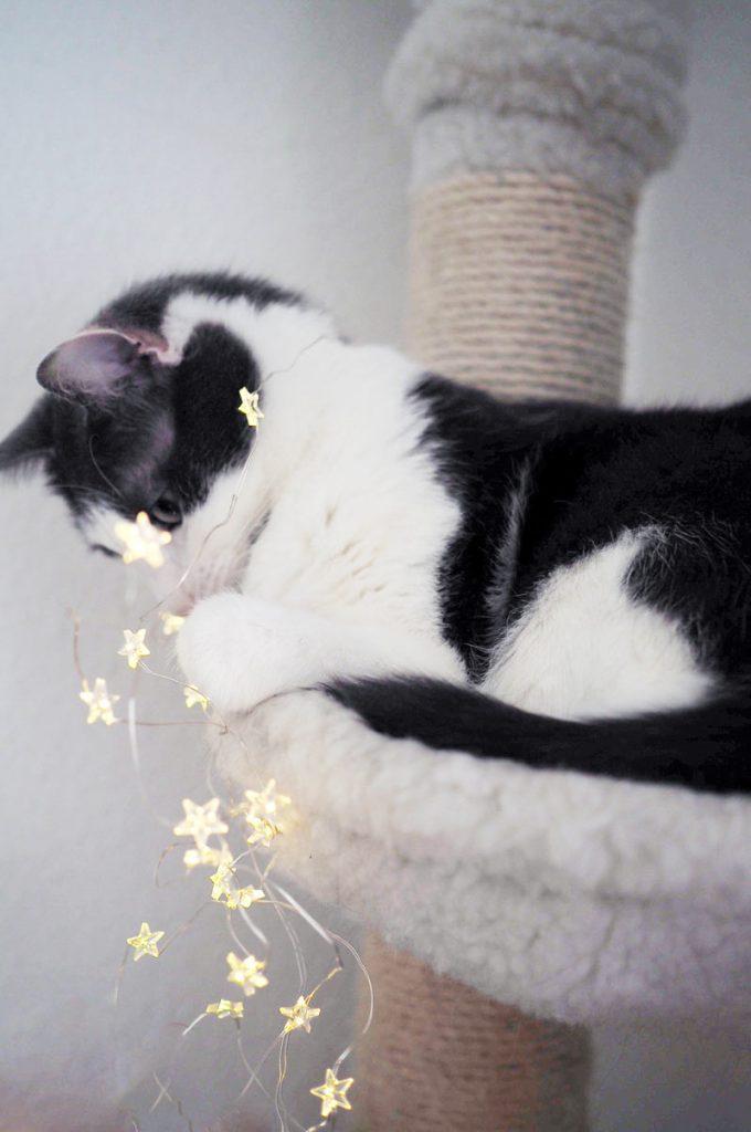 Mikro-LED-Lichterkette mit Katze