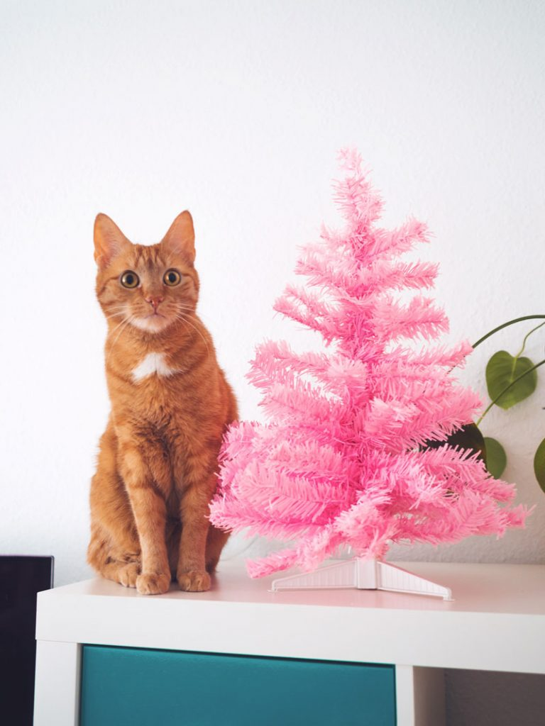 Kater Gimli und Weihnachtsbaum