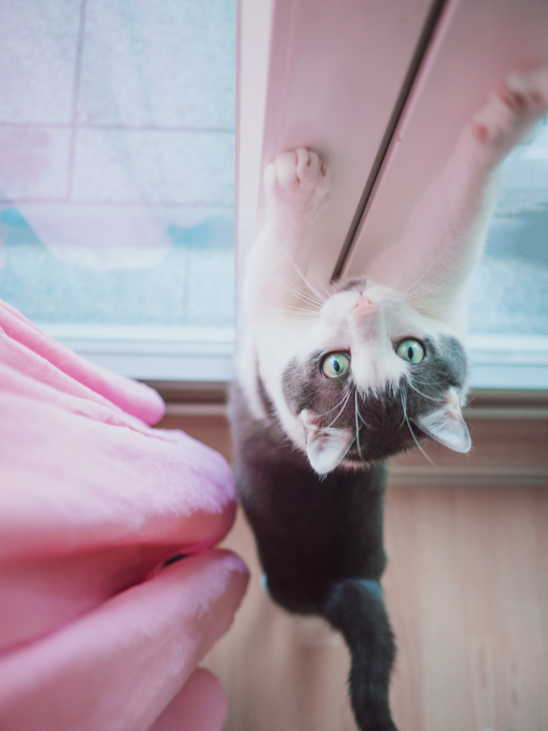 Aus dem Leben einer Katzenlady #2