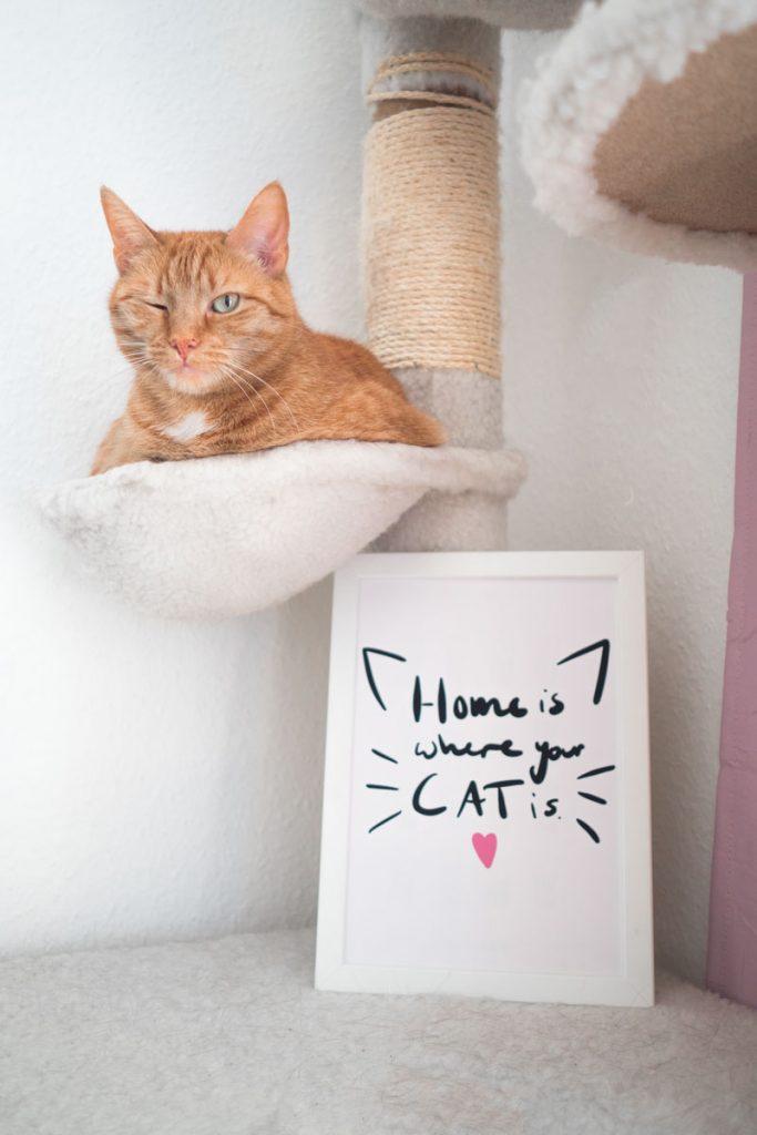 KuneCoco • Aus dem Leben einer Katzenlady #3 • Lettering mit Katzenspruch