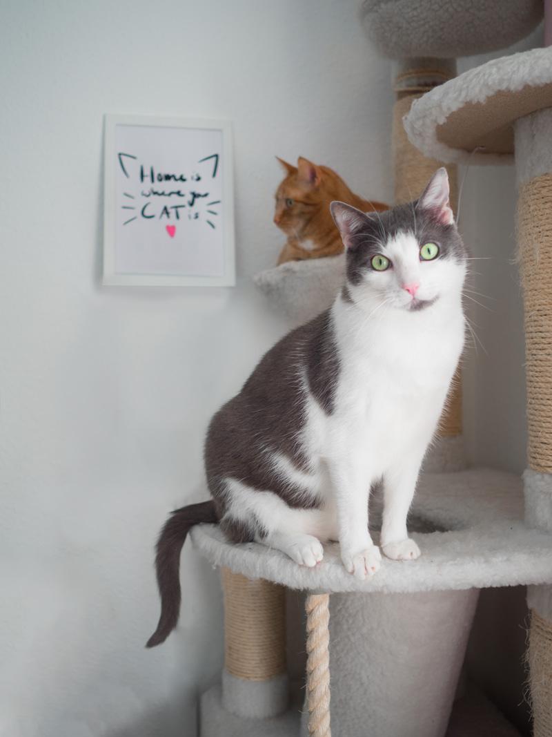 Aus dem Leben einer Katzenlady #3