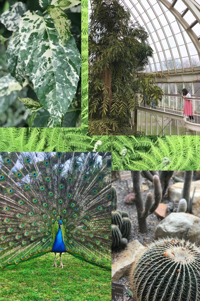 KuneCoco • Abenteuer Blindbooking • Genf Botanischer Garten