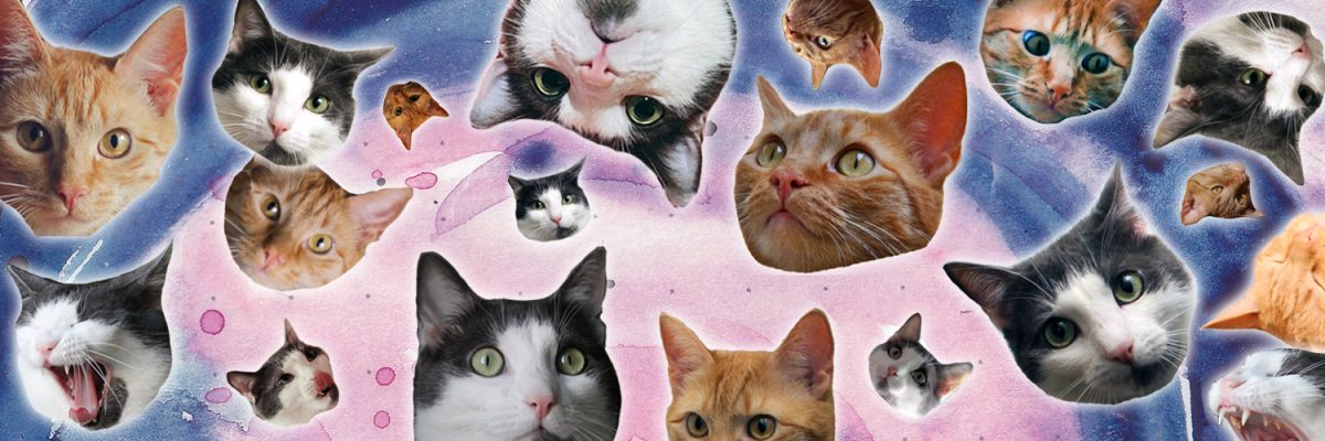 Die Schnurrberts miau miau miau