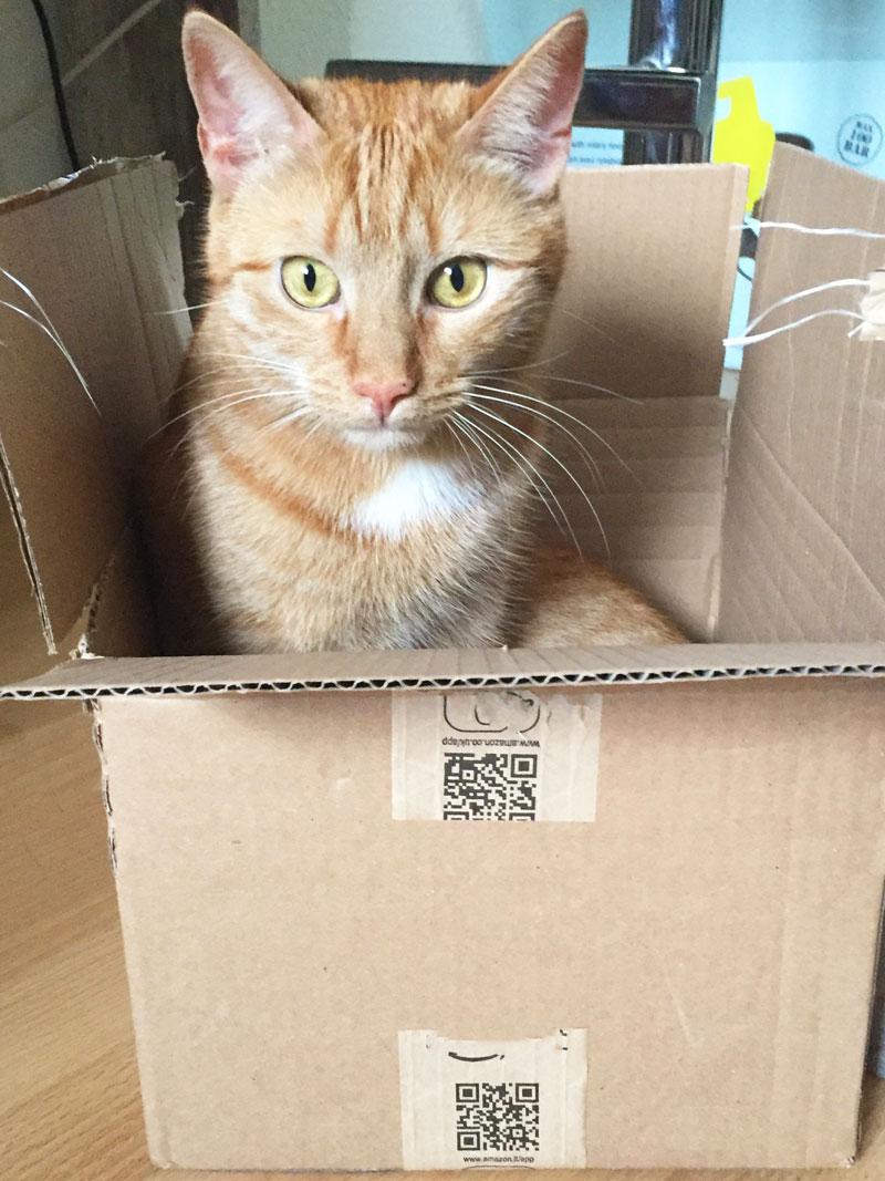 Kisten und Katzen