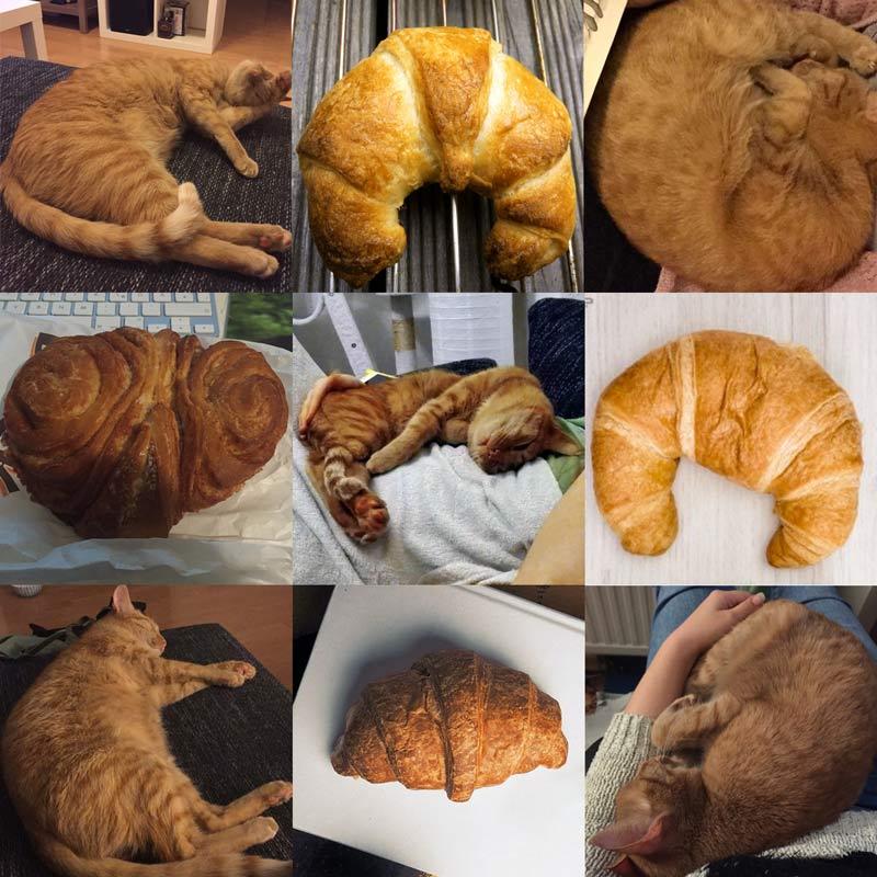Cat or Croissant